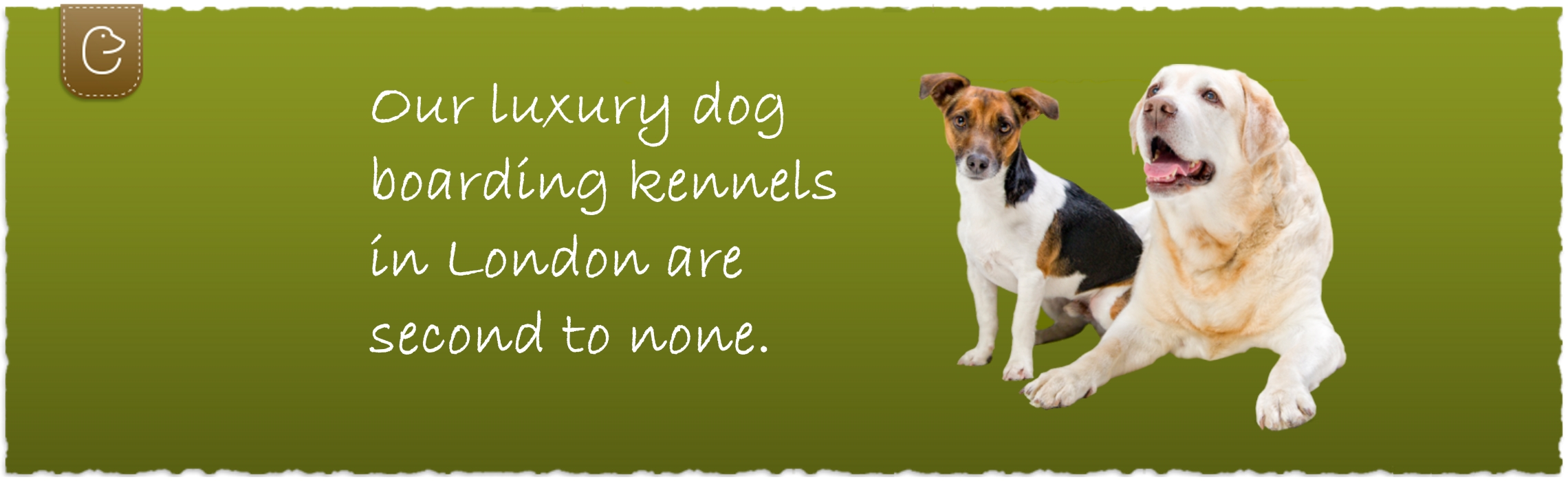 Dog kennels in london luxury dog boarding london elmtree pet hotel solutioingenieria Gallery